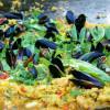 Skaldjurspaella, salsa och mat som gemensamt språk