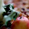 Sagan om världens godaste äppelkaka